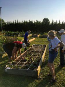 Master Gardener volunteers plant vegetables in demonstration garden
