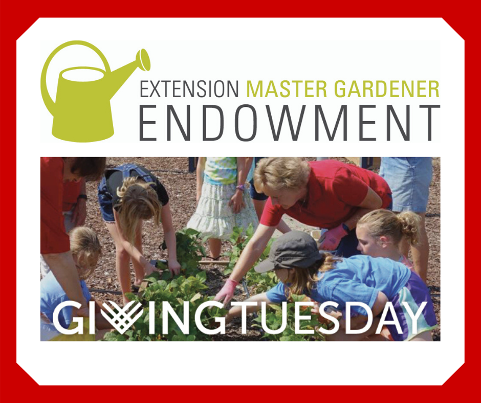 Master Gardener volunteer planting vegetables with children