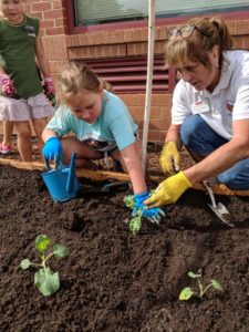 Pat Newcomer and elementary school student plant and water young cabbage plants