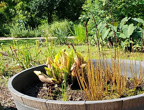 bog plants growing in a container
