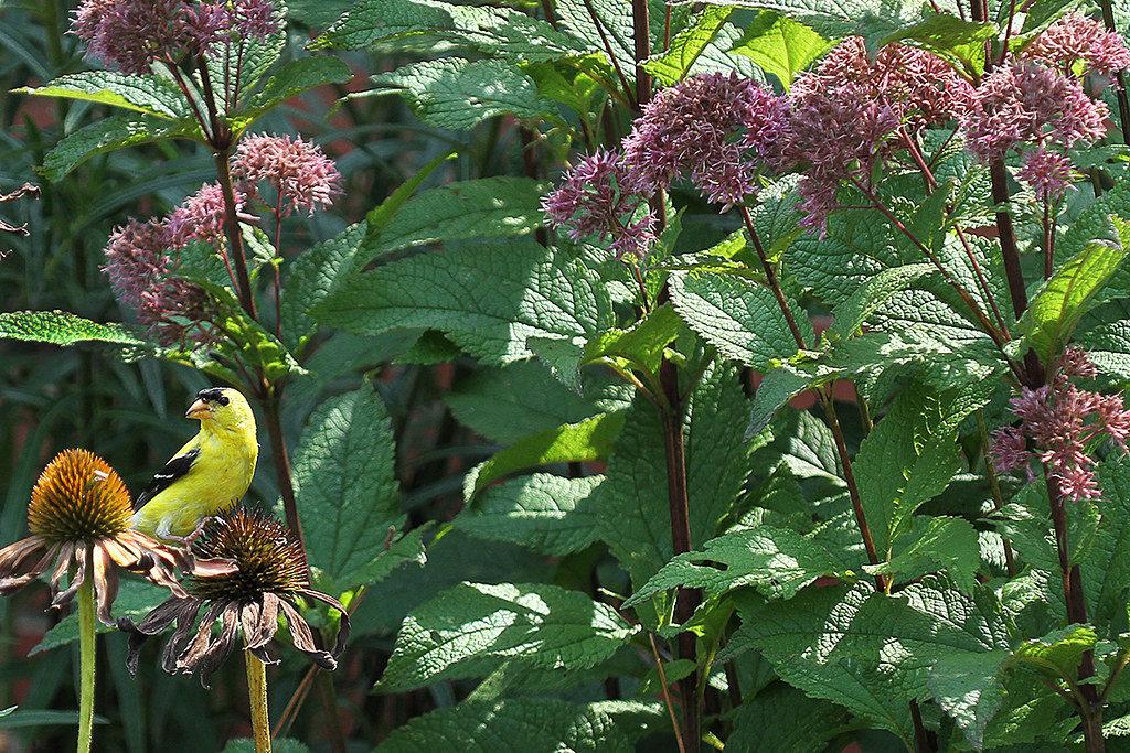 flowers in pollinator garden