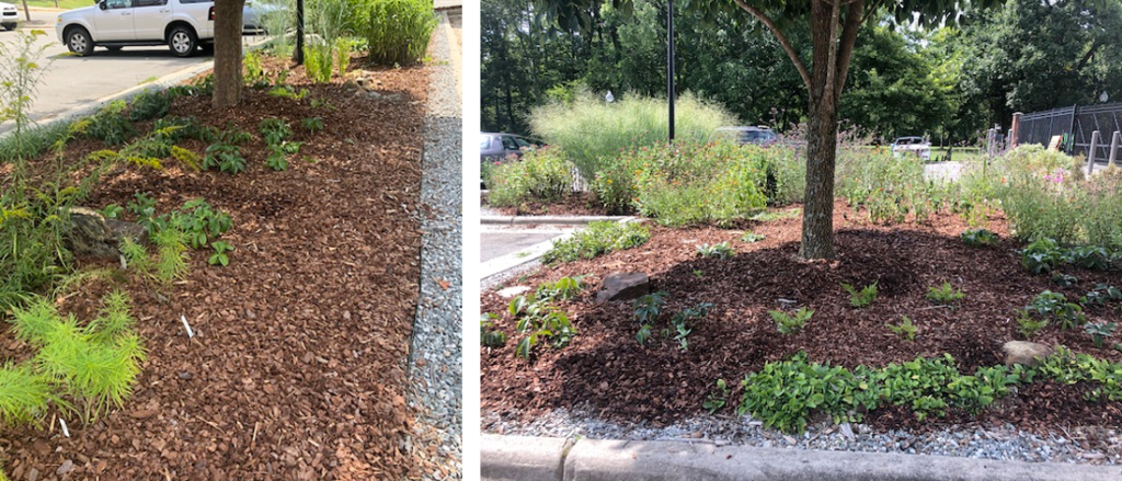 stormwater demonstration garden images