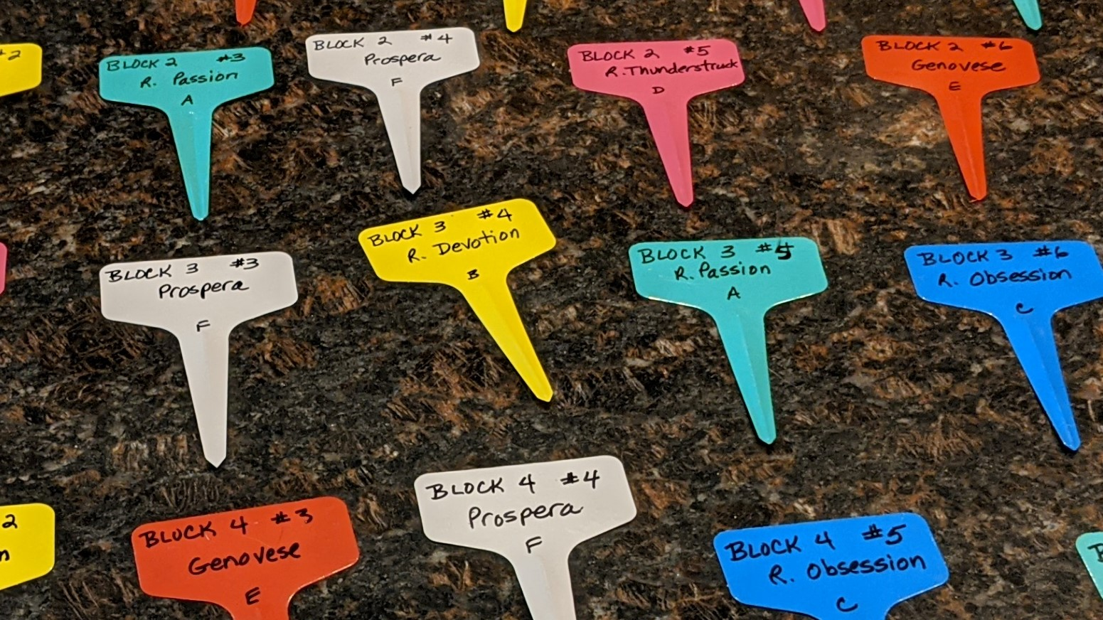 colored plant tags on a countertop